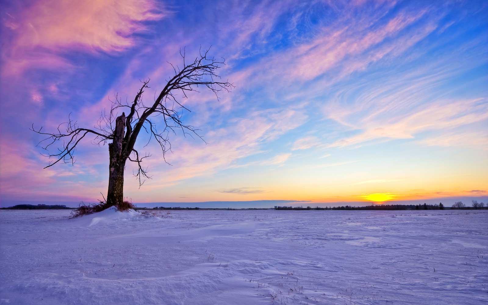 winterland scape